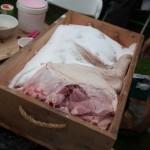 0045_PigDay2012