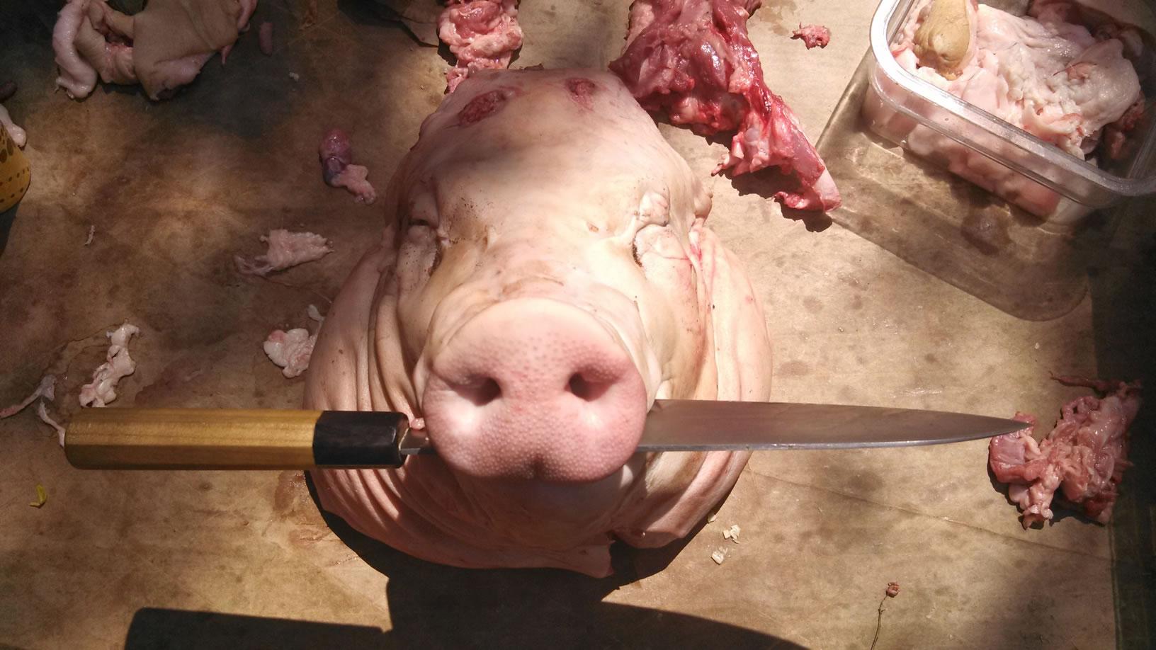 Pig Fest 2014